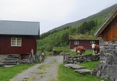 Biking to Sunndalssætra (Mrs.Snowman) Tags: sunndalssætra sykkylven biking dairyfarm cows summer westernnorway norway