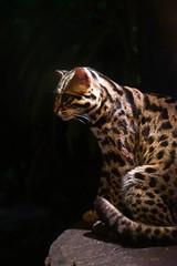 - (alysaly) Tags: animals nightsafari zoo wild