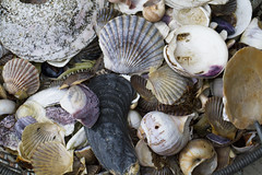 Beach Treasures (brucetopher) Tags: wet treasure shell shells collection beach sea ocean finds found