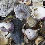 Beach Treasures thumbnail