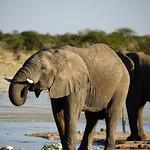 DSC07205 - NAMIBIA 2017 thumbnail