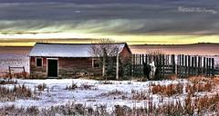 Can.Horses.HD.c (caroles_corner) Tags: snowy ruralscenery albertacanada horses winter horsesandbarn canadianrockies winterscene outdoors olympus hdr