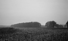 Rotten fields (Rosenthal Photography) Tags: asa400 landscape landschaft städte anderlingen ilfordxp2 c41 35mm bw 20170502 olympus35rd analog ff135 dörfer siedlungen nature fields trees barn spring frost mist fog morning olympus 35rd 40mm ilford xp2 epson v800