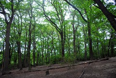 Clearing up nicely (zawtowers) Tags: green chain section 11 walk crystalpalacetonunheadcemetery sunday 4th june 2017 sunny warm able stroll walking exploring south east london suburbs sydenham hill wood nature reserve park open space trees clearing light uphill heading