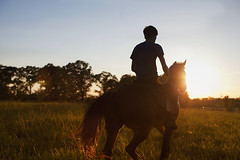 IMG_3572 (Mary Anne Morgan) Tags: horses silhouette