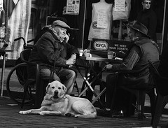 { (dagomir.oniwenko1) Tags: blackandwhite bw boston street style canon candid canoneos60d dog rspca lincolnshire england life sitting uk gb