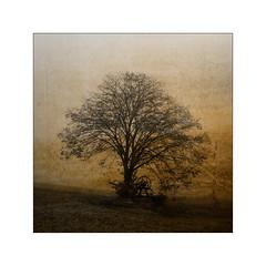 L'arbre à l'abreuvoir (jldum) Tags: arbre fontaine landscapesdreams lanscape tree sepia art explore