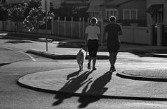Urban shadows (OzzRod) Tags: pentax k1 smcpentaxdfa100mmf28macro street walkers shadows monochrome blackandwhite roundabout dog intothesun barbeach dailyinmay2017