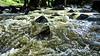 Dreams of nothing (Blas Torillo) Tags: sanagustínahuehuetla puebla méxico mexico río river agua water naturaleza nature belleza beauty fotografíaprofesional professionalphotography fotógrafosmexicanos mexicanphotographers nikon coolpix p500 nikonp500 coolpixp500 nikoncoolpixp500