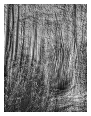 Curiosity (GR167) Tags: abstract november ruleofthirds iphone iphoneography iphoneart blackandwhite monochrome snapseed blur road woods slowshutterapp