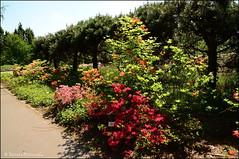 DSC_8765 (facebook.com/DorotaOstrowskaFoto) Tags: ogródbotaniczny kwiaty powsin warszawa