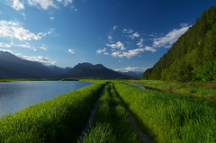 Mid Spring (Kristian Francke) Tags: outdoors landscape spring green sunny blue bluesky beautiful bc british columbia pentax nature natural sky big grass tree trees forest path road