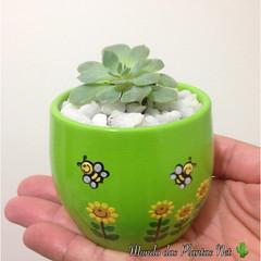 Suculenta Mini (adriano270266) Tags: plant mini cacto cactus suculent suculenta