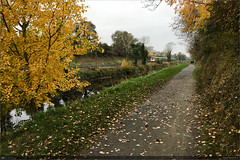 Autumn on the Royal Canal