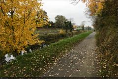 Autumn on the Royal Canal