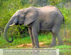 _DJA3342 copy (naturephotographywildlife) Tags: kruger wildlife scenery animals birdlife a99ii africa park