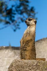 7 (Gabriel Fila) Tags: temaiken zoo zoológico parque temático animales