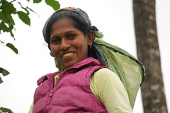 Sri Lanka, tea pickers (64) (walterkolkma) Tags: srilanka tea pickers teapickers centralhighlands nuwaraeliya strathdon teaestates women laborers tamils sonya6300