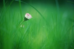 whaaaaat??? (christian mu) Tags: flowers bokeh nature spring botanicalgarden botanischergarten münster muenster sonya7ii sony germany 9028g 90mm 9028 macro