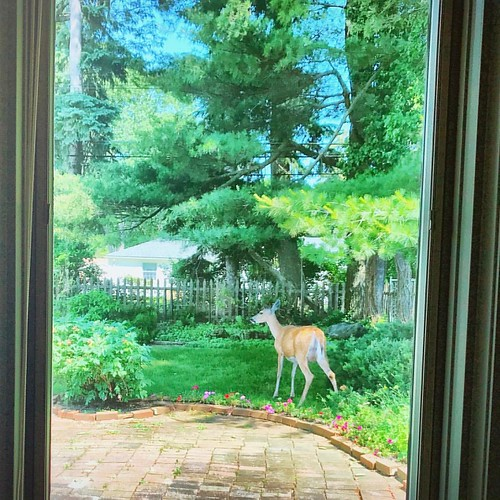 Oh deer. A visitor!