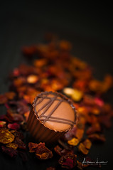 Chocolate, My Sweet Weakness 2 (Alec Lux) Tags: cacao candy chocolate cocoa delicious dessert food foodphotography pralines small sweet sweetfood tasty tastyfood waregem vlaanderen belgium be