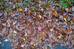 Winter (Makro Paparazzi) Tags: nikon nikond7000 d7000 tokinaatxpro1224mmf4ifdxii tokina wideangle wideanglephotography winter lisce zima leaves nature priroda naturephotography