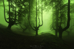 El funeral de los árboles (Mimadeo) Tags: horror forest dark tree trees fog mist fantasy misty mystery landscape shadow light green evening darkness magic evil mood foggy fear nightmare spooky transylvania woods ray halloween scary ghost silhouette gloomy enchanted romania creepy mysterious surreal trunk gothic spring