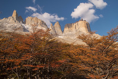 When an autumn and clean sky stays together (Gustavo Almeida Couto de Andrade) Tags: autumn torresdelpaine chile patagonia patagônia landscape landscapes paisagem paisagens outono sky céu cloud nuvens nuvem mountain mountains montanha montanhas vale valledelfrancés valefrancês yellow red tree trees arbol árvores hiking walk blue trekkingw trekkingo magallanes
