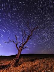 Con el cielo ganado (www.jorgelazaro.es) Tags: lightpainting nocturna paisaje luces noche circumpolar seco polar muerto trazas campo árbol linterna estrellas azul lleida catalunya españa es
