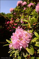 DSC_8800 (facebook.com/DorotaOstrowskaFoto) Tags: ogródbotaniczny kwiaty powsin warszawa