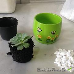 Suculenta Mini (adriano270266) Tags: suculent cactus suculenta