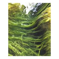 Aguas volviendo a su cauce - Waters returning to their course #cauce #seabed #algas #water #aguas #waters #agua #ocean #mar #sol #waves #sand #boat #wave #alga #seaweed #algae #course #imarchi #fotografo #fotografomadrid (IMARCHI) Tags: aguas volviendo su cauce waters returning their course seabed algas water agua ocean mar sol waves sand boat wave alga seaweed algae imarchi fotografo fotografomadrid imarchicom photographer madrid spain photography photo foto iphone phoneography iphoneography mobile eyeem instagram