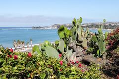 Capo Beach Cactus (sosidesc) Tags: capo cactus