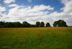 Red, Green and Yellow Field (I) (Modesto Vega) Tags: nikon nikond600 d600 fullframe field red yellow green blue surrey surreyfield outddor landscape