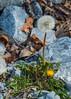 20120310-DSC_2370.jpg (manfredlaner) Tags: gatlinburg sevierville tennessee smokeymountain pigeonforge