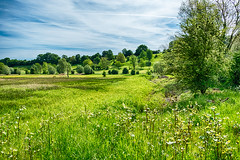 Spring Meadow (enneafive) Tags: nature overbroek sinttruiden gelinden xt2 green clouds light meadow bluesky fujifilm