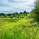 Spring Meadow thumbnail
