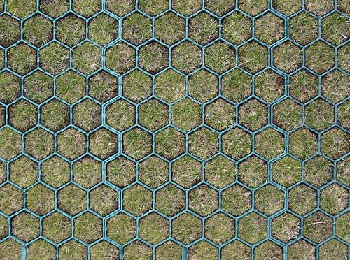 grassy hexagons