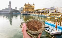 IMG_40952 (Manveer Jarosz) Tags: amritsar bharat goldentemple hindustan incredibleindia india punjab sikh sriharmandirsahib gold gurdwara holy morning pilgrimage pool sunny temple water