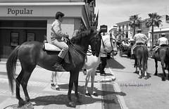 Día de san Isidro. Romería en Alameda (Málaga) (lameato feliz) Tags: alameda romería fiesta caballo jinete calle