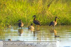 _DJA3407 copy (naturephotographywildlife) Tags: kruger wildlife scenery animals birdlife a99ii africa park