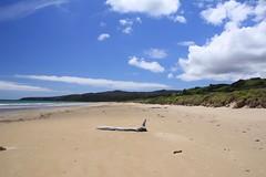 Drifty (genevieve_beecham) Tags: australia tasmania driftwood bigbeach beach australianbeach tasmanianbeach tasmaniancoast
