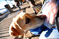 Indi (Dedalomouse Photos) Tags: animales animali animals ritratto portrait pelo cane dog perro occhi eyes eye city città citta ciudad color colore calle tommaso tommasoolmeda olmeda dedalomouse muso indi