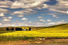 Pastoral Landscape, Palouse County (klauslang99) Tags: nature naturalworld northamerica klauslang agriculture palpuse county washington pastotal landscape