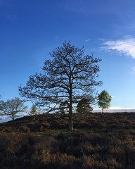 Naked Tree (Marc Sayce) Tags: naked tree woolmer ranges forest conford whitehill longmoor south downs national park hampshire may spring 2017