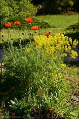 DSC_8774 (facebook.com/DorotaOstrowskaFoto) Tags: ogródbotaniczny kwiaty powsin warszawa