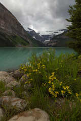 Flowers by Louise (Ken Krach Photography) Tags: banffnationalpark lakelouise