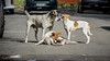12junho_-16 (Laércio Souza) Tags: laerciosouza cachorros rolesp saopaulo periferia chaveiro igreja templo brasil