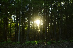 2017_0527Low-Sun0001 (maineman152 (Lou)) Tags: trees sun lowsun filteredlight sunthroughtrees nature naturephoto naturephotography landscape landscapephoto landscapephotography may maine