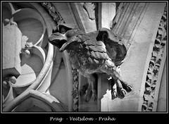 Gargoyles - 8 (fotomänni) Tags: prag praha prague veitsdom gargoyles wasserspeier steinfiguren skulpturen skulptur sculpture kunst schwarzweis blackwhite noirblanc gargouille manfredweis
